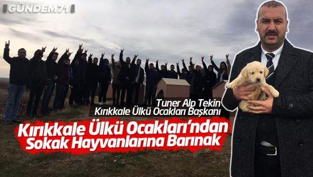 Kırıkkale Ülkü Ocakları'ndan Sokak Hayvanlarına Barınak