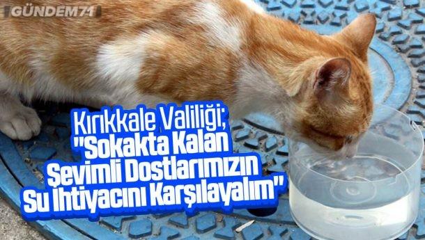 """Kırıkkale Valiliği; """"Sokakta Kalan Sevimli Dostlarımızın Su İhtiyacını Karşılayalım"""""""
