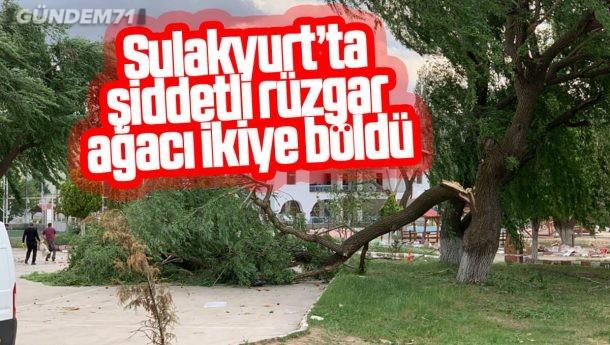 Sulakyurt'ta Şiddetli Rüzgar Ağacı İkiye Böldü