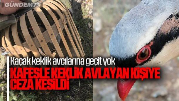 Kaçak Keklik Avı Yapan Şahsa Ceza Uygulandı