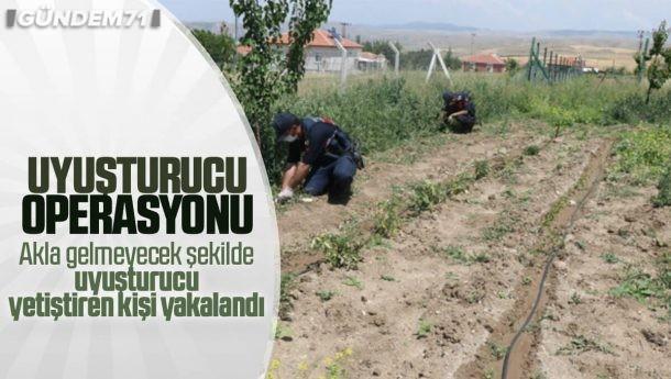 Kırıkkale'de Uyuşturucu Operasyonu: 112 Kök Kenevir Ele Geçirildi