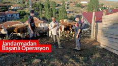 Kaybolan 18 Kurbanlık Hayvanı Jandarma Buldu