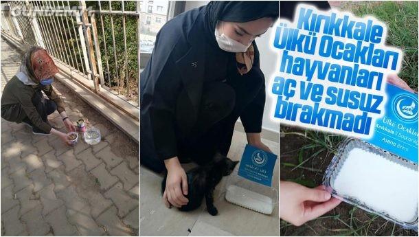 Kırıkkale Ülkü Ocakları Başkanlığı, Hayvanlara Mama ve Su Verdi