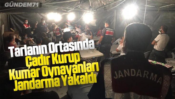 Tarlanın Ortasında Çadır Kurup Kumar Oynayanları Jandarma Yakaladı