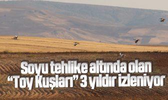 """Kırıkkale'de Nesli Tükenmekte Olan """"Toy Kuşları"""" 3 Yıldır İzleniyor"""