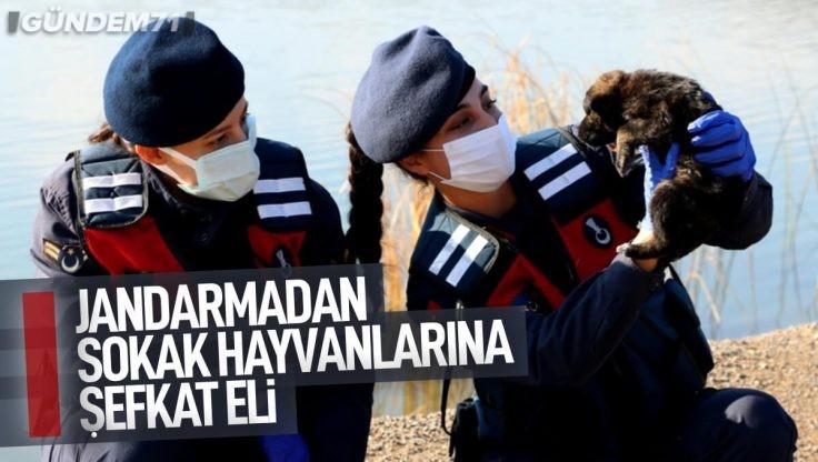 Kırıkkale Jandarma Ekiplerinden Sokak Hayvanları İçin Barınak ve Yiyecek
