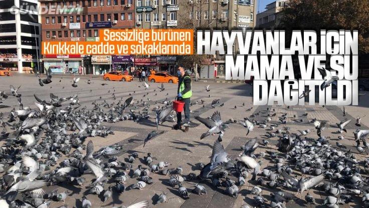 Kırıkkale Belediyesi Tarafından Hayvanlar İçin Mama ve Su Dağıtıldı