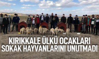 Kırıkkale Ülkü Ocakları'ndan Sokak Hayvanlarına Barınak ve Yiyecek Temini