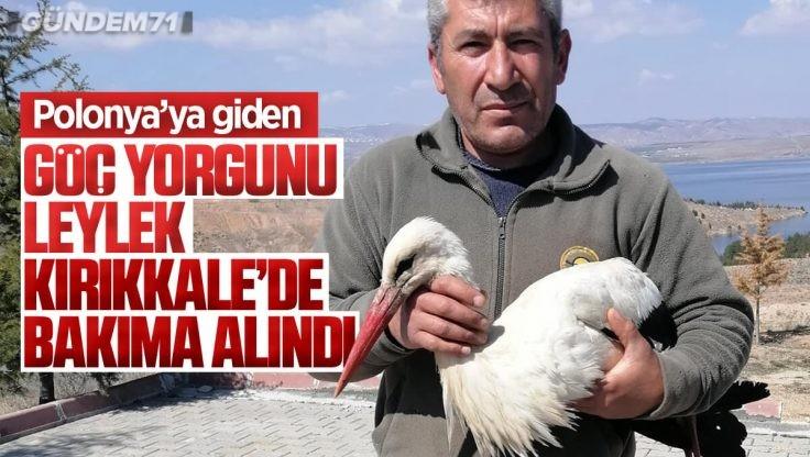 Kırıkkale'de Göç Yorgunu Leylek Bakıma Alındı