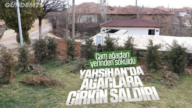 Yahşihan'da Ağaçlara Çirkin Saldırı