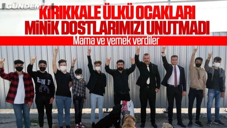 Kırıkkale Ülkü Ocakları, Minik Dostlarımızı Unutmadı